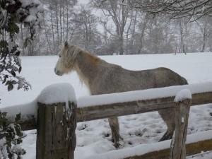 neige.41-300x225